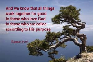 Romans 8-28